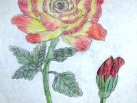 Моя квітка