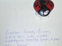 Parabüzən - сонечко